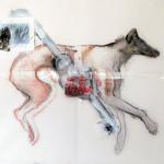 coyote1 0.92-x1.26cm